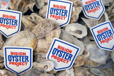 Baylander Billion Oyster Project presentation @ Pier @ 125th & Marginal Sts.